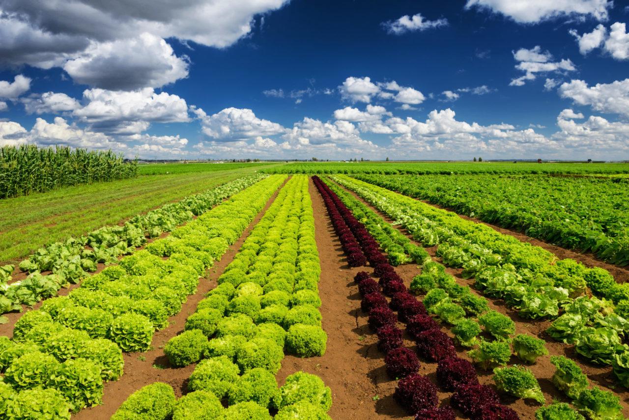 「生産緑地2022年問題」で土地はどう活用していくべきか